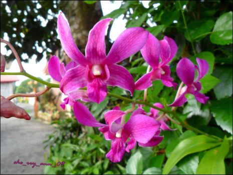 Orchids by che09