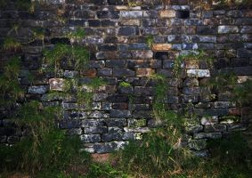 Wall with grass background by WokDesign