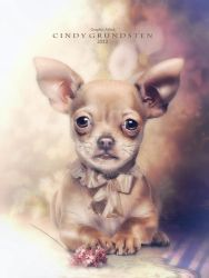 Chihuahua Puppy by CindysArt