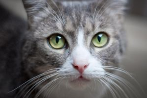 My cat and it's powerful eyes by stephane-bdc