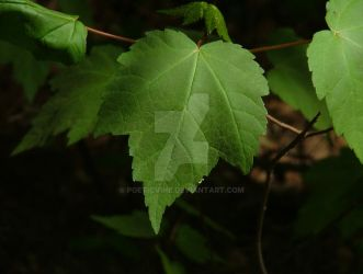 Leaf close up. by PoeticVine