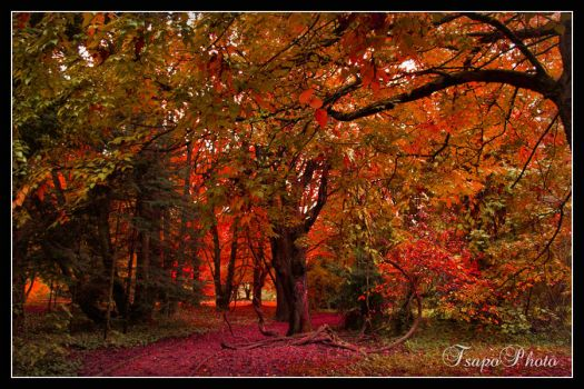 the autumn is here I by Tsapo