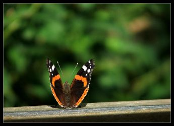 Resting on a fence by ranmor