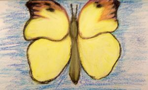 Buttfly study in pastel by Andailite47