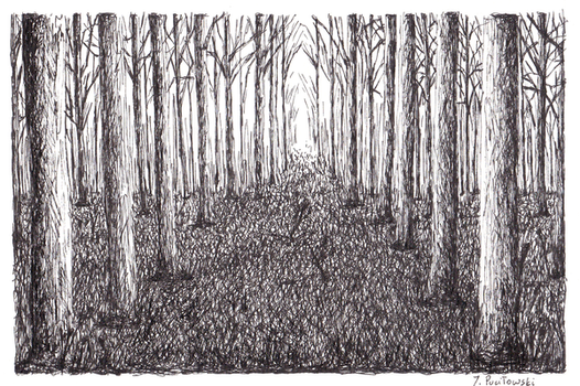 Path in the Forest by sanntta82