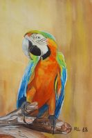 Parrot by Rocksane-Art