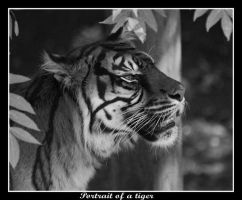 Portrait of a tiger by lloydh