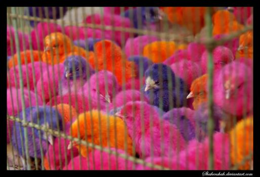 Colored Chicks by Shahenshah