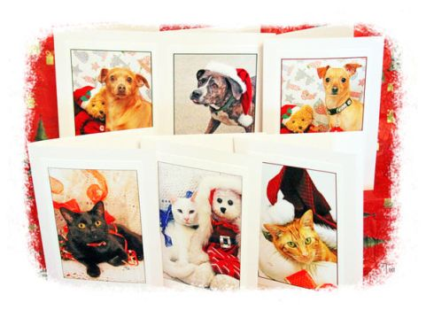 Holiday Cards for The Shelter Project by TeaPhotography
