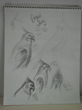 Bird Sketches by Atherian