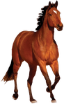 Horse PNG by CaptainJackHarkness
