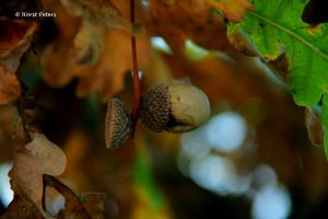 Autumn Impressions 9 by bluesgrass