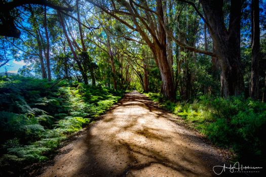 Morton National Park by andyhutchinson