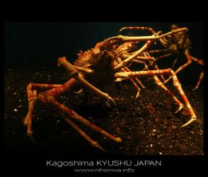 Japanese sea alien -1- by Lou-NihonWa