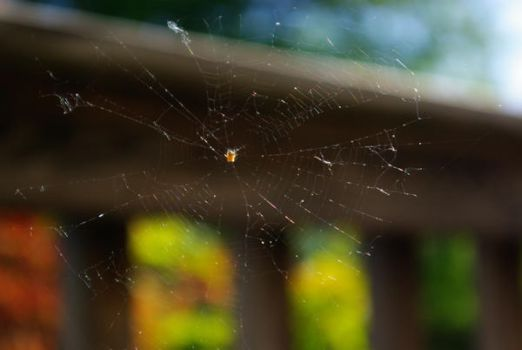 Spider Web by Jules89
