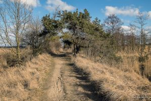 Walk a muddy road 2 by wiwaldi24