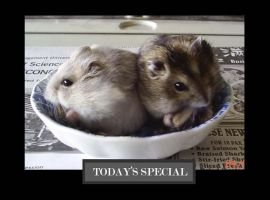 Hamsters-for supper by Tahki
