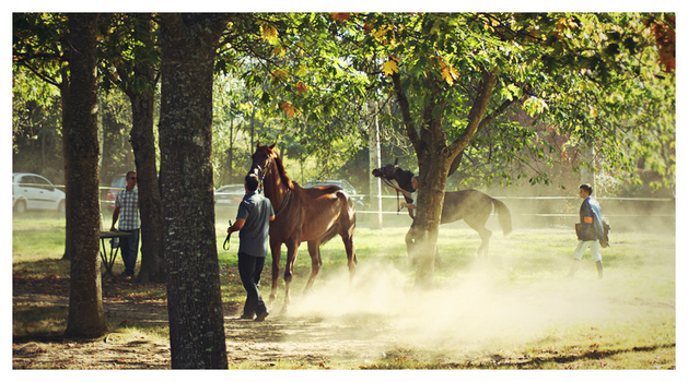 Horse dust by sourpepper
