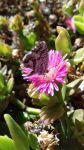Butterfly and Pink Flower by ABDCrochet
