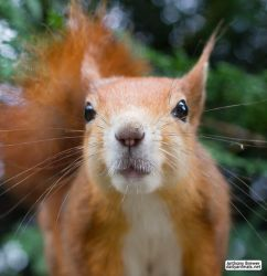 Squirrel all up in your face by jaffa-tamarin