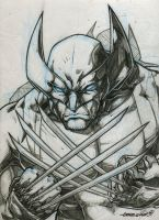 Wolvie (pencils) by emmshin