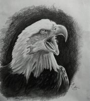 Bald Eagle by 3dennewman