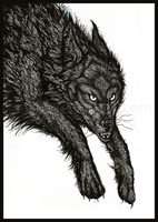 A Wolf In The Fold by kaijae
