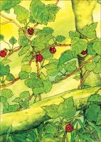 the Wildberries, watercolor by Liche1004