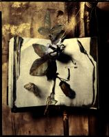 bookmark by lostbooks