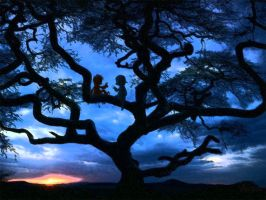 Buddies in a tree. by dromens