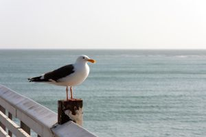 Sea Bird by FellowPhotographer