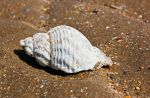 My Shell by BusterBrownBB