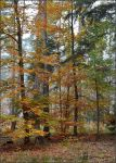 Group Of Autumn Trees by ghardegh