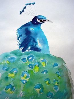 Peacock from McClay Road by mightee-mouse