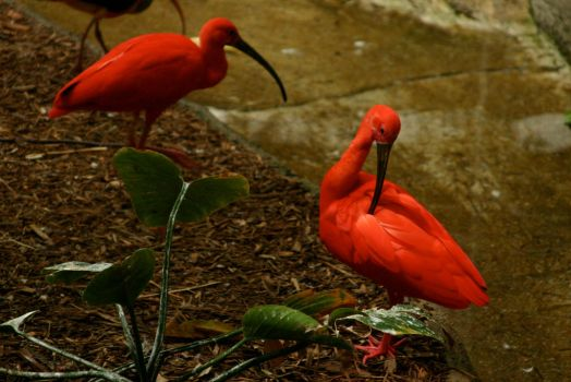 Exotic birds at the Zoo by nwalter