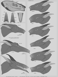 Koltherian Facial Types Reference by C0ZR10N