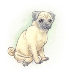 Pug-face by maggock