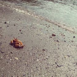 Georges Island - Dead Crab by muffla