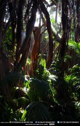 Free Stock Jungle Trees Tropical Forest Leafs by PeterKmiecik