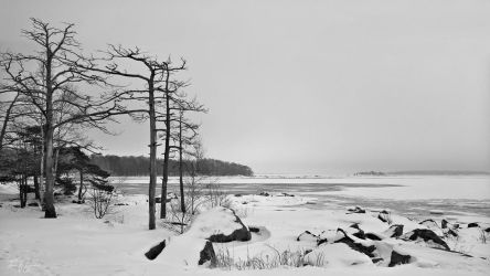 Trees on the seashore by Pajunen
