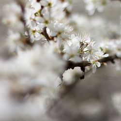 It is Spring Again by DorotejaC