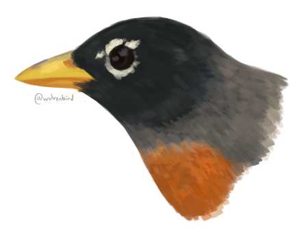 Robin Doodle by WolvenBird