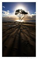 A Tree against the Sea by colpewole