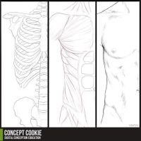 Anatomy Resource: Male Upper Body by CGCookie