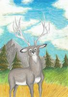 Mule Deer Stag by Louisetheanimator