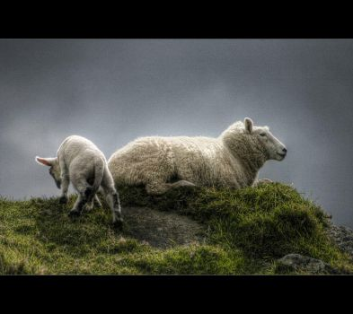Where naughty lambs go by light-recycled