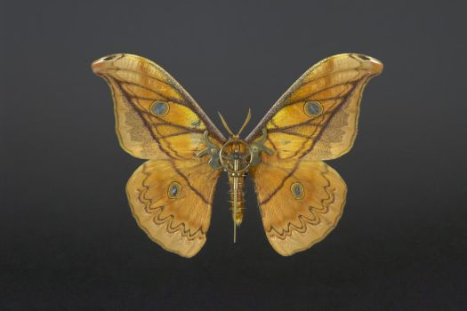 MeCre - Lepidoptera by mecre