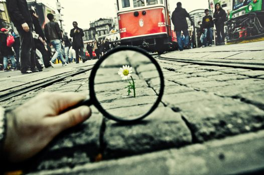 99- Magnifying Glass... VIII by salihagir