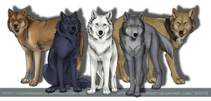 Wolf's rain by CatherineSt