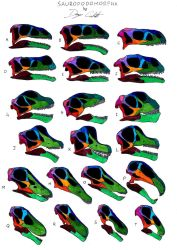 Sauropodomorpha skull comparison (not to scale) by Dennonyx